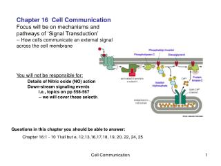 Chapter 16  Cell Communication Focus will be on mechanisms and pathways of 'Signal Transduction'