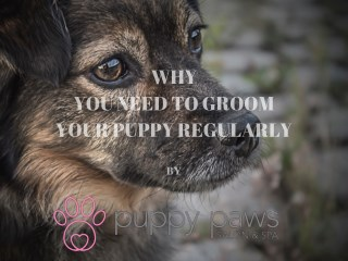 why is it necessary to groom your puppy regularly