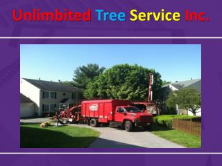Hiring Tree Service in Silver Spring