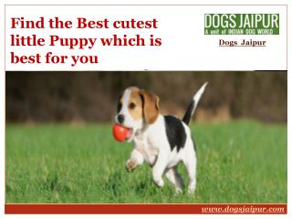 Find the Best cutest little Puppy which is best for you