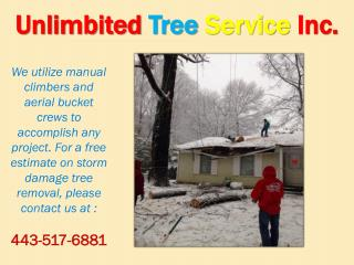 Storm Damage Tree Service Baltimore