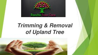 Quality Tree Trimming and Removal for Upland Tree