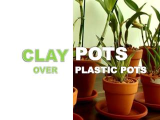 Buy Orchid Pots For Your Orchids From Florida