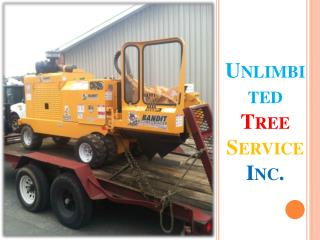 Tree Trimming Service in Clarksville, MD
