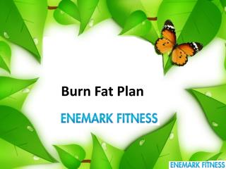 Burn Fat Plan