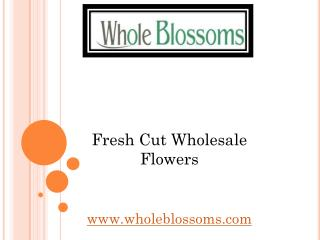Fresh Cut Wholesale Flowers - Wholeblossoms