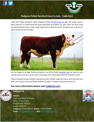 Pedigree Polled Hereford Cow For Sale - Fabb Herd