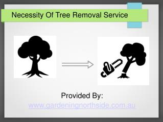 Necessity of tree removing service.