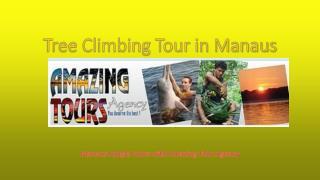 Tree Climbing Tour in Manaus