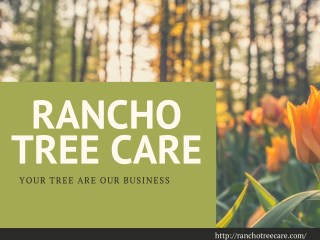 Auspicious Tree Care services