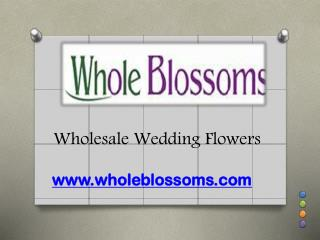 Wholesale Wedding Flowers - www.wholeblossoms.com