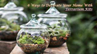 6 Ways to Decorate Your Home With Terrarium Kits