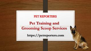 Pet Training and Grooming Scoop Services