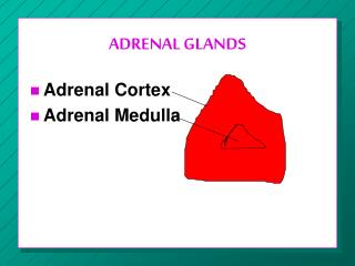 ADRENAL GLANDS