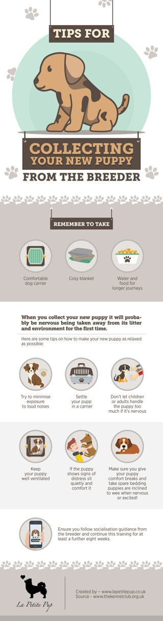 Tips For Collecting Your New Puppy From The Breeder