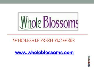 Wholesale Fresh Flowers - www.wholeblossoms.com