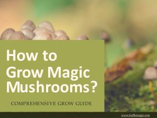 How to Grow Magic Mushrooms?