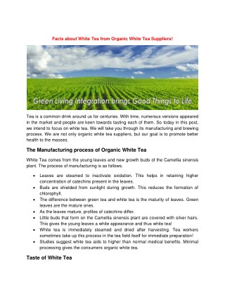 Facts about White Tea from Organic White Tea Suppliers!