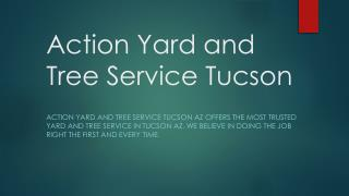 Action Yard and Tree Service Tucson