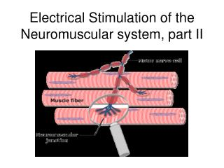 Electrical Stimulation of the Neuromuscular system, part II