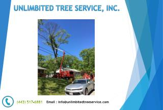 Tree Trimming Service Near Pasadena