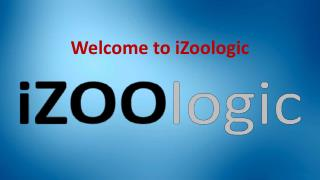 Internet Phishing   iZOOlogic