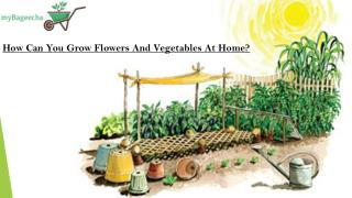 How Can you Grow Flowers and Vegetables At Home?