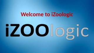 Online Fraud Prevention   iZOOlogic