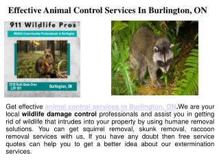 Animal Damage Control Burlington ON