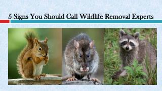 5 Signs You Should Call Wildlife Removal Experts