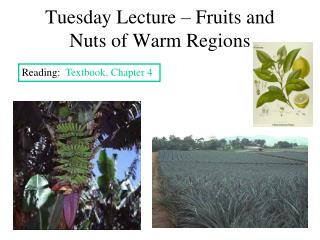 Tuesday Lecture – Fruits and Nuts of Warm Regions