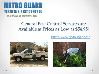 General Pest Control Services are Available at Prices as Low as $54.95!