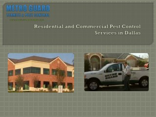 Pest control Dallas Texas