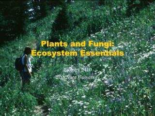 Plants and Fungi: Ecosystem Essentials