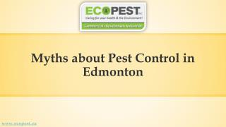 Get the List of Known Myths about Pest Control in Edmonton