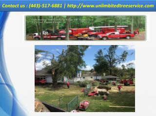 Tree Service Pasadena - CALL US  (443)-517-6881