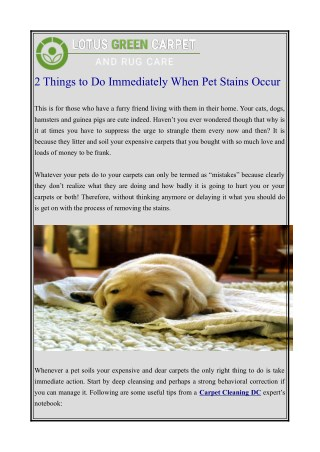 2 things to do immediately when pet stains occur