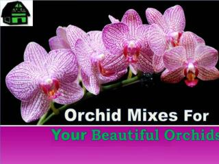 Orchid Mixes For Your Beautiful Orchids