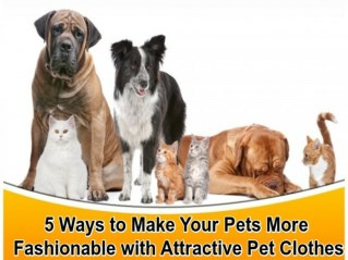 Tips for Pets & their attractive clothes