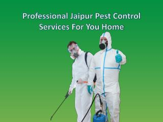 Professional Jaipur Pest Control Services For You Home