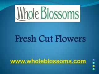 Fresh Cut Flowers - wholeblossoms
