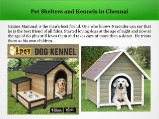 Dog Shelters in Chennai