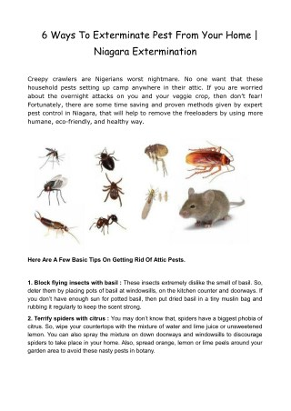 6 Ways To Exterminate Pest From Your Home | Niagara Extermination