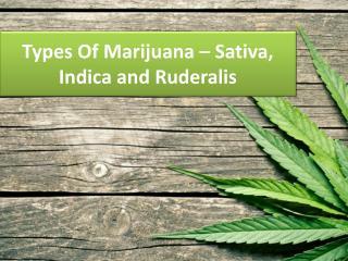 Types Of Marijuana – Sativa, Indica and Ruderalis
