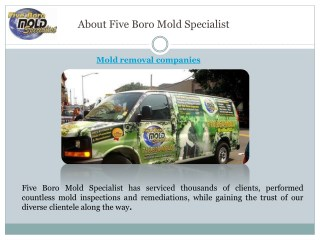 Mold remediation companies