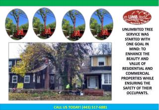Millersville Tree Service, Tree Removal