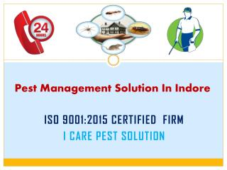 Pest Management Solution in Indore
