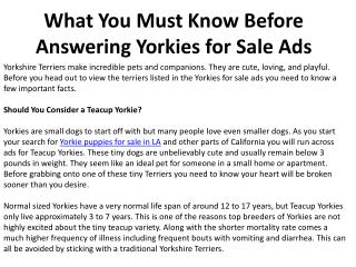 What You Must Know Before Answering Yorkies for Sale Ads