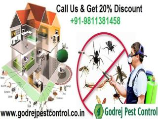 Free Inspection & Get 20% Discount For Pest Control Noida | Delhi NCR
