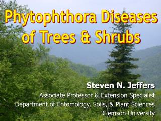 Phytophthora Diseases of Trees & Shrubs